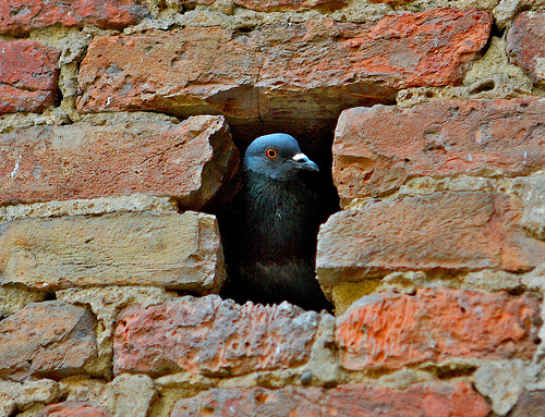 Pigeon-holed